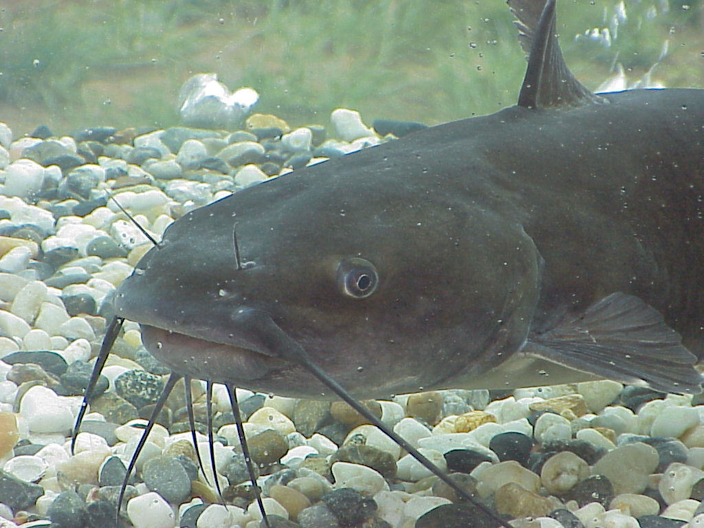 catfish_feed_pellets